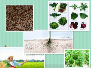 Water Soluble Organic Microelement Nitrogen, Phosphorus and Potassium NPK Fertilizer pictures & photos