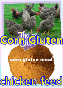 Corn Powder for Chicken Feed with Low Price pictures & photos