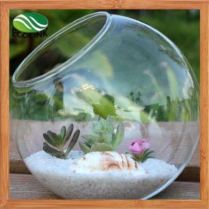Decoration Glass Vase Air Plant Glass Terrarium pictures & photos