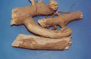 Acanthopanax Root pictures & photos