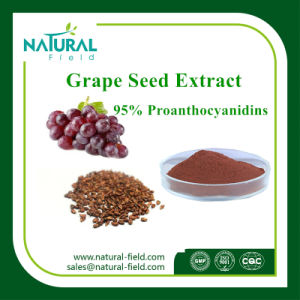 Anthonyanins Extract CAS: 84929-27-1 Proanthocyanidins 95% 99% Grape Seed Extract Plant Extraxct pictures & photos