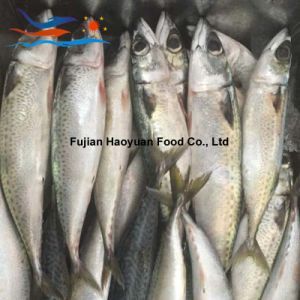 High Quality Land Frozen W/R Pacific Mackerel pictures & photos