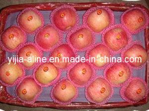 Fresh FUJI Apple (1)