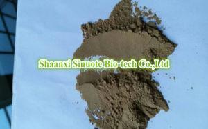Factory Natural Ilex Latifolia Thunb/ Kuding Tea 10: 1 Extract Powder pictures & photos