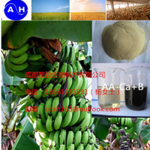 Ca+B Amino Acid Chelate Banana Foliar Fertilizer Water Soluble Fertilizer pictures & photos