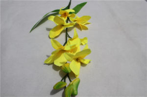 Orchid Flowers/Artificial Orchid Flowers Wholesale Phaleanopsis pictures & photos
