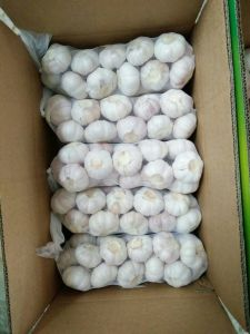 High Quality Fresh Garlic and Peeled Garlic pictures & photos
