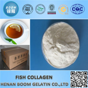 Food & Cosmetic Grade 100% Natural Collagen Powder pictures & photos