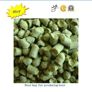 Fragrant Beer Hop with Best Quality pictures & photos