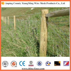 Electric Galvanized or Hot DIP Galvanized Barbed Wire (XM-BW) pictures & photos