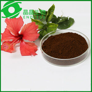 Organic Certification Ling Zhi Spore Powder Ganoderma Lucidum Extract pictures & photos