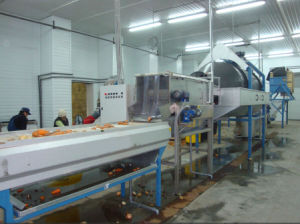 Drum Washing and Peel Machine for Radish, Ginger, Lettuce, Carrots 3000 pictures & photos