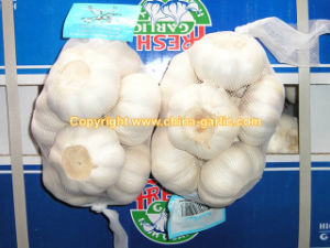 Fresh Super White Garlic 500g/sack, 10kg/carton (F01)