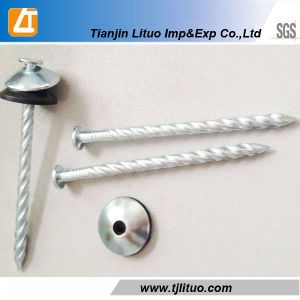 Washers Twisted Ring Shank Wood Bulk Nails pictures & photos