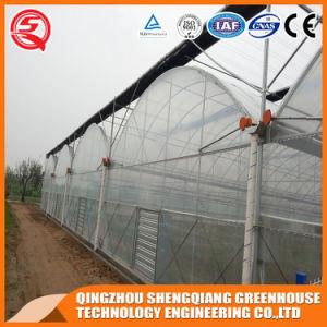 Multi Span Vegetable/ Garden/ Frame Plastic Film Green House pictures & photos