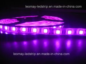 Factory Supply SMD5050 Purple Color LED Strip with Ce (LM5050-WU60-P) pictures & photos