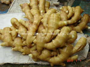 2015 New Season Fresh Vegetabls Yellow Ginger pictures & photos