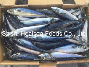 Board Frozen Pacific Mackerel Fish pictures & photos