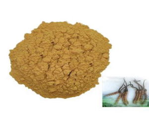 100% Natural Cordyceps Sinensis Extract Polysaccharides 40% pictures & photos
