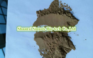 Factory Natural Green Tangerine Peel/ Vatica Mangachapoi 10: 1 Extract Powder pictures & photos