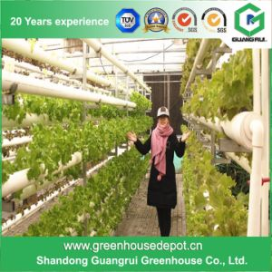 Green Houses Nft Hydroponic System pictures & photos