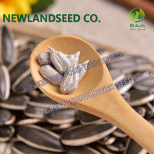 Sunflower Seeds 363 with Best Price for Roasting pictures & photos