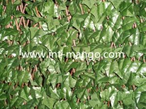 Chain Link Artificial Leaves Hedge for Garden (MW16013) pictures & photos