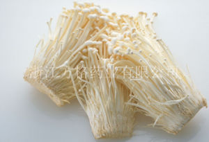 Flammulina Velutipes Extract; Needle Mushroom; Fruit Body; Edible and Medicinal Mushroom; GMP/HACCP Certificate