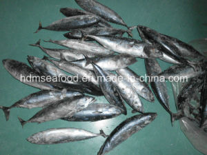 Seafrozen Fish Bonito for Market pictures & photos