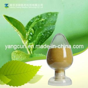 CAS 989-51-5 Green Tea Extract 50~98% Tea Polyphenols pictures & photos