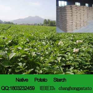 Potato Starch (1304600100) pictures & photos