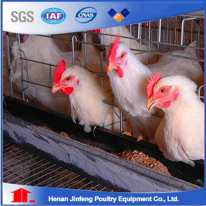 Hot Galvanized Poultry Cages for Poultry House pictures & photos