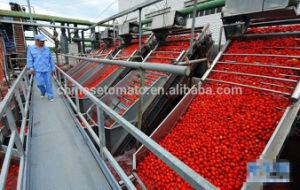 Halal Certification Canned Tomato Paste pictures & photos