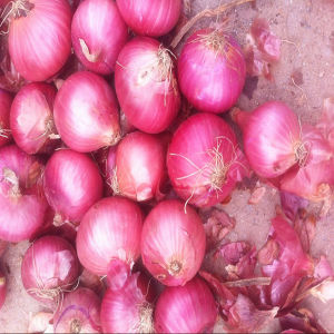 2016 Onion Seeds /Fresh Onion on Sale pictures & photos