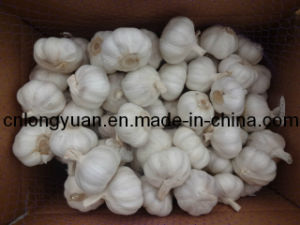 The Best Quality Shandong Origin Garlic pictures & photos