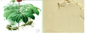 2014 Hot Sell Pure Nature Pseudo-Ginseng/Sanqi Powder pictures & photos