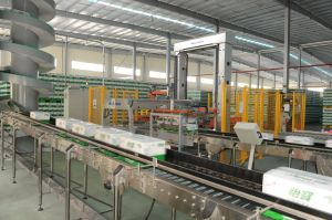 Fully Automatic Low Position Palletizer pictures & photos