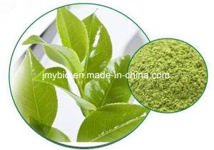 Antioxidant Green Tea Extract/L-Theanine 98%/ Tea Polyphenols pictures & photos