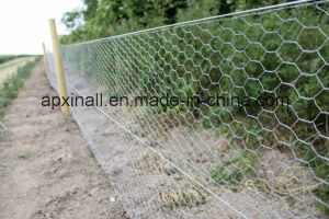 """1/4"""" 1"""" Chicken Wire Factocy pictures & photos"""