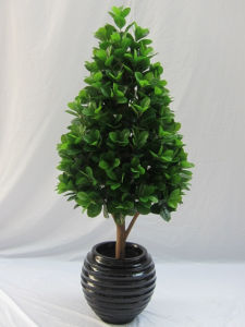 Artificial Potted Evergreen Plants Bonsai pictures & photos