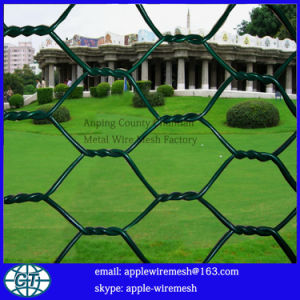 China Factory High Quality Hexagonal Wire Netting pictures & photos