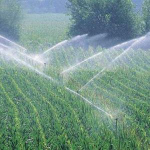 Hot Sale EDDHA-Fe Organic Fertilizer pictures & photos