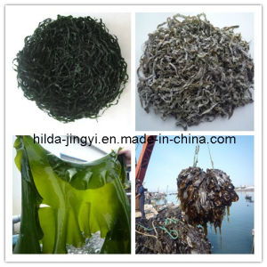 Dried Cut Kelp, Shredded Seaweed Laminaria, Sea Kelp, Sea Kale)