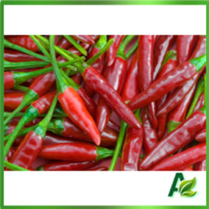 High Purity Synthetic Capsaicin Nonivamide 99% pictures & photos