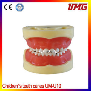 Lower Price Dental Jaw Dental Teeth Model for Study pictures & photos
