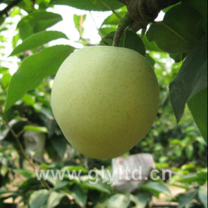 Chinese Fresh Green Emerald Pear pictures & photos