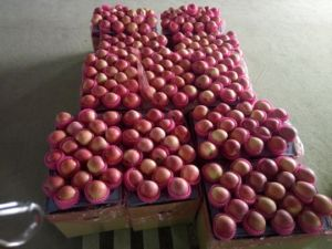 Golden Supplier Chinese Fresh Red FUJI Apple/Qinguan Apple pictures & photos