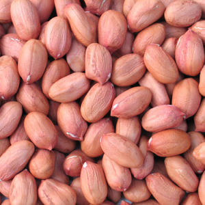 Long Shape Peanut Kernals with Red Skin pictures & photos