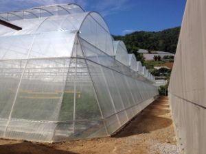 HDPE 50X25 Anti-Insect Net with UV Treated for Greenhouse pictures & photos