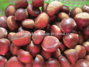 2015 Harvest Fresh Chestnut (50-60) pictures & photos